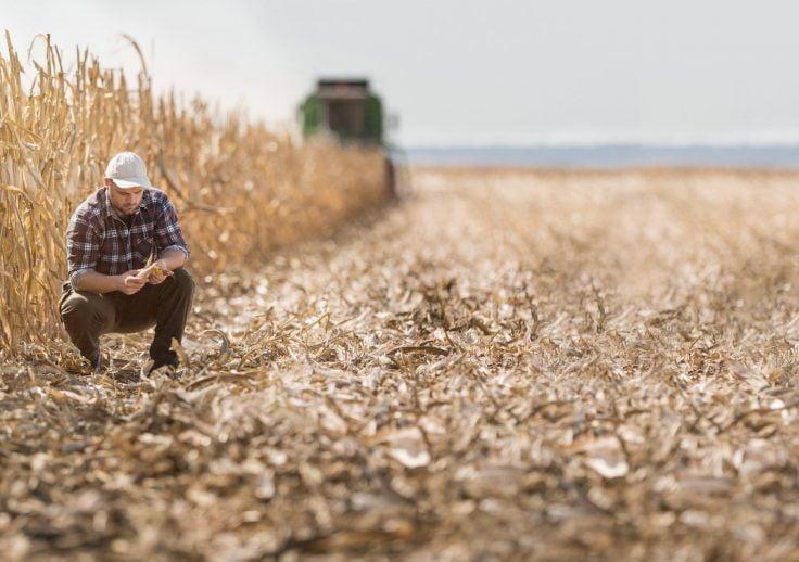Odszkodowania rolnicze